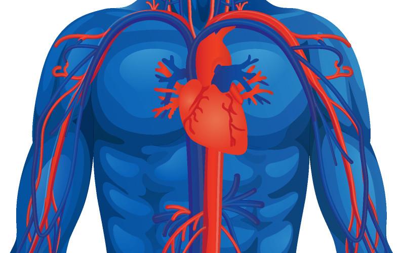 Ten en cuenta estos 7 consejos para optimizar tu corazón