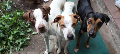 Rescatan 13 perros en una sola vivienda que sobrevivían al comer tierra y piedras