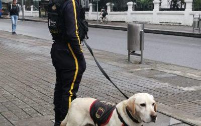 Empresas del sector de la vigilancia brindarán apoyo a la Fuerza Pública en Paro Nacional
