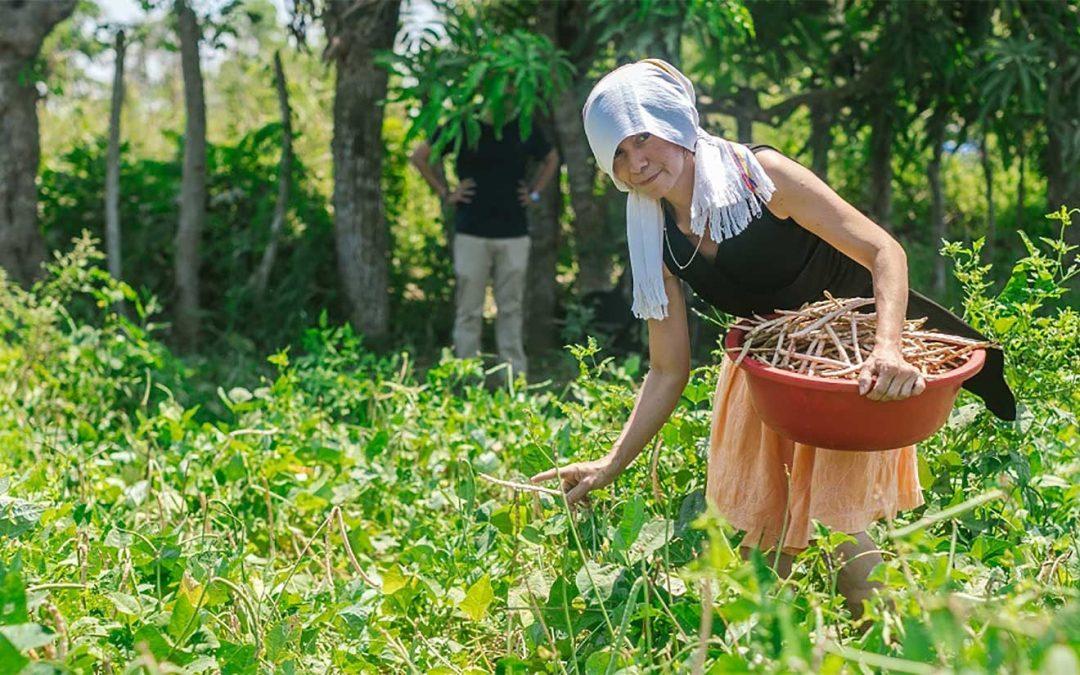 Por COVID 19, Gobierno Nacional pone a disposición del agro $1 billón en créditos para mantener la productividad del campo