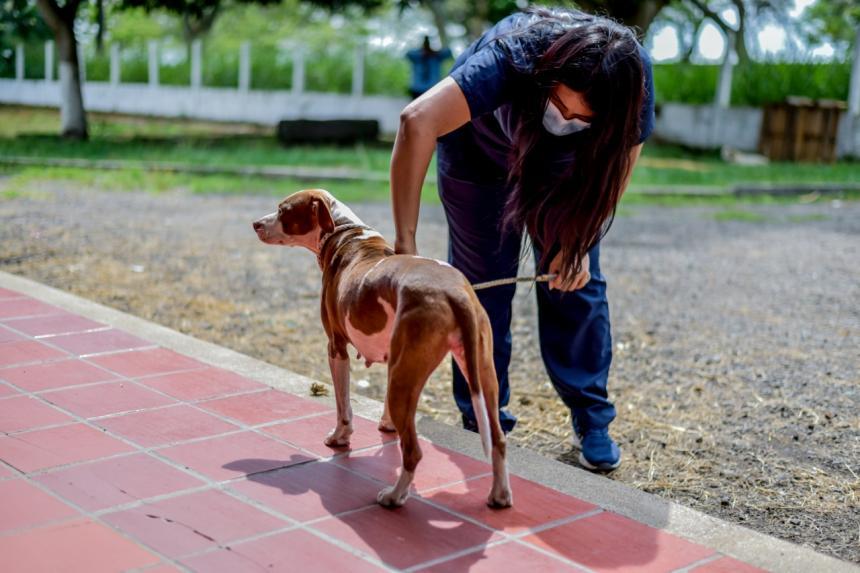 Más de 1.100 animales fueron esterilizados por el CAPA en el 2020