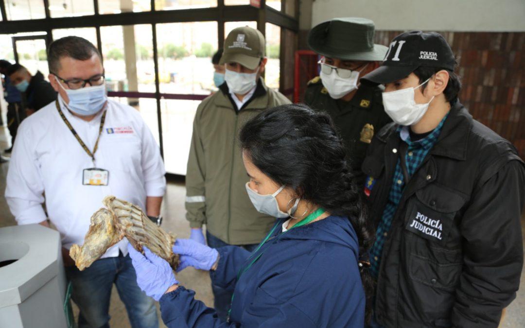 Acción conjunta contra el tráfico de fauna silvestre durante el retorno del puente de reyes