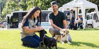 La Alcaldía de Medellín reabre jornadas de adopción de perros y gatos e implantación de microchips en centros comerciales
