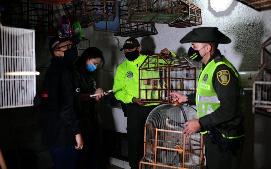 Fiscalía intensifica acciones investigativas y judiciales contra el tráfico y consumo de animales silvestres en semana santa