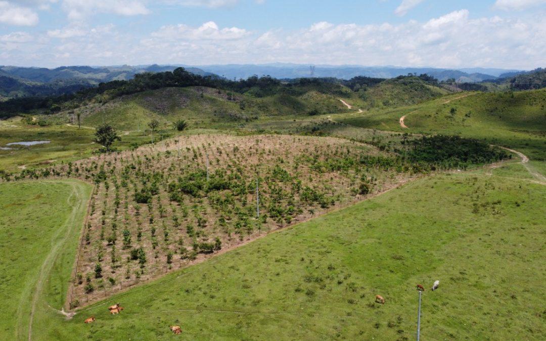MinCiencias financiará proyectos en Bioeconomía para impulsar desarrollos en regiones del país