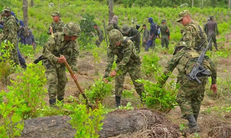 Fuerza Pública ha erradicado 38 mil hectáreas de cultivos ilícitos.