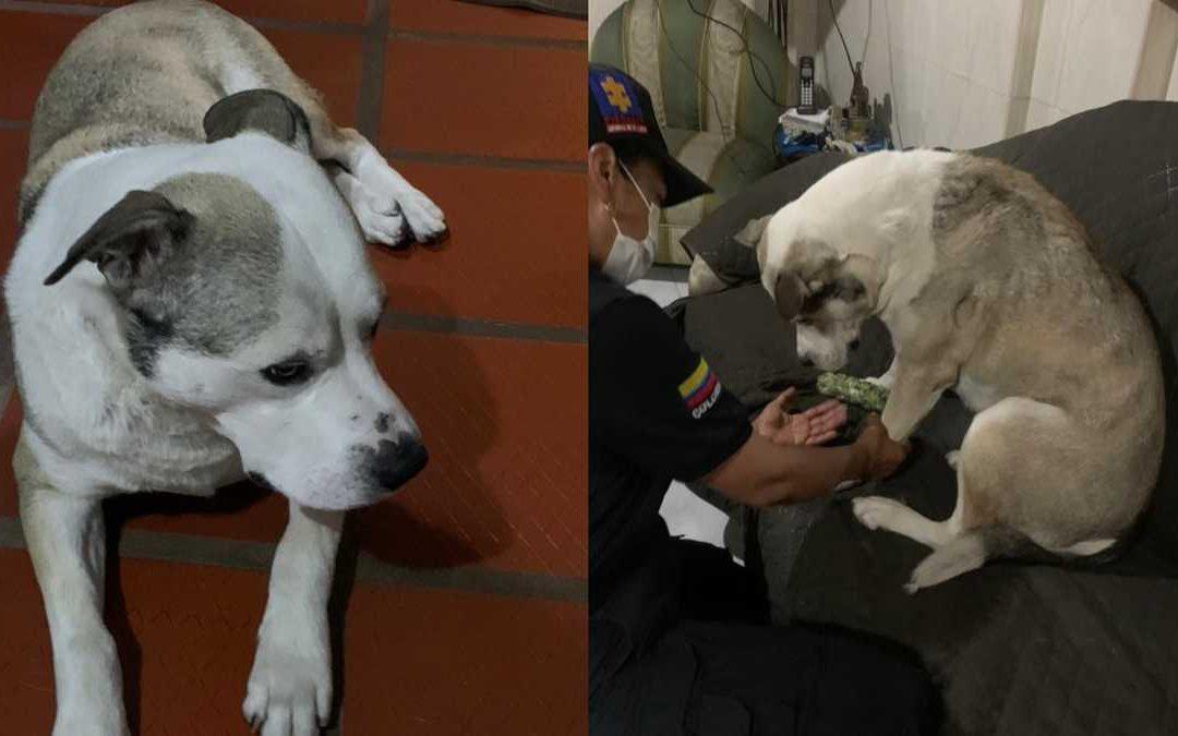 Toby, el perro que sufrió maltrato animal quien fue atacado con ácido, se encuentra bien