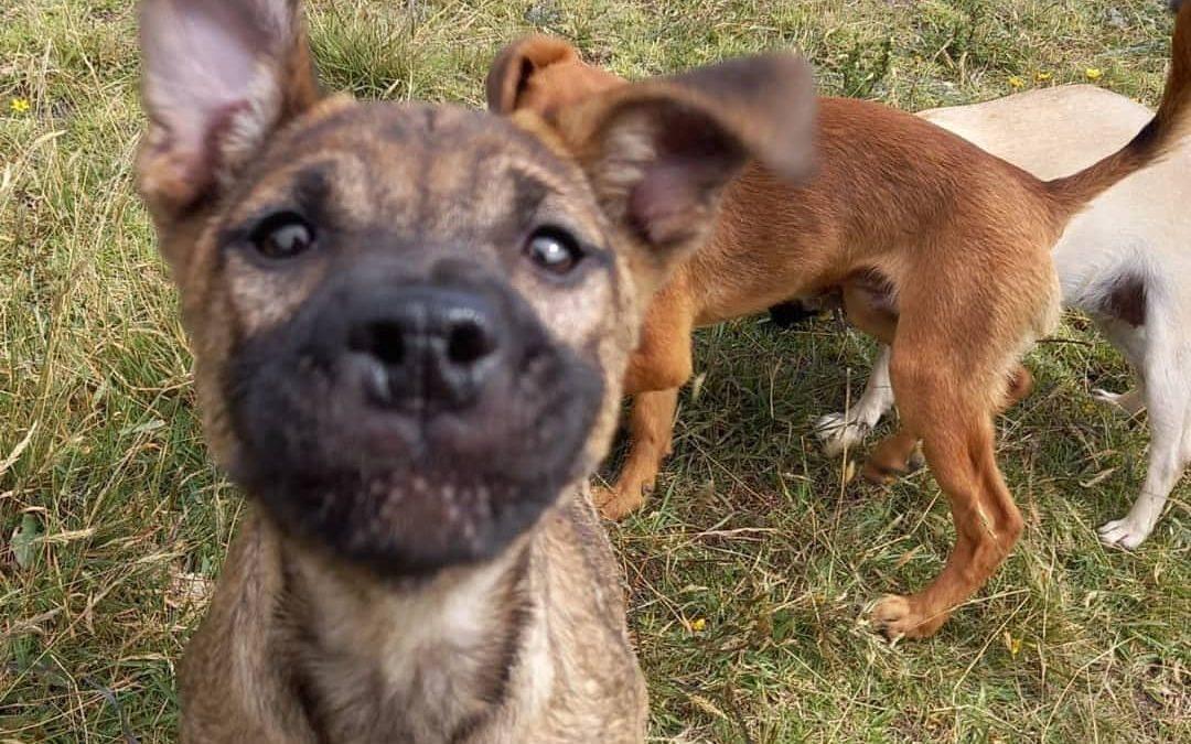 La fundación animalista Corazón Canino está en peligro de cierre de sus operaciones
